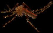 Zika-Virus_2